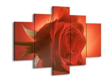 Obraz červevé růže (F001639F150105)