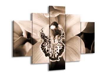 Černobílý obraz orchideje (F001874F150105)