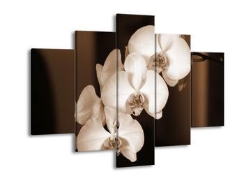 Krásný černobílý obraz orchidejí (F001880F150105)
