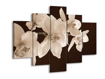 Krásný obraz bílých květin (F001888F150105)