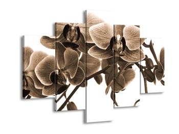 Obraz krásných květů (F001898F150105)