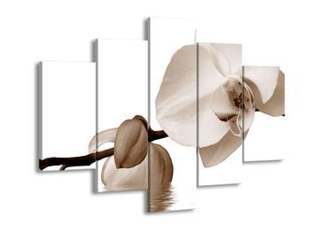 Krásný obraz bílé orchideje (F001900F150105)