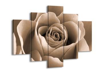 Obraz květu růže (F001904F150105)