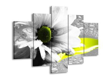 Obraz květiny a kapek rosy (F002054F150105)