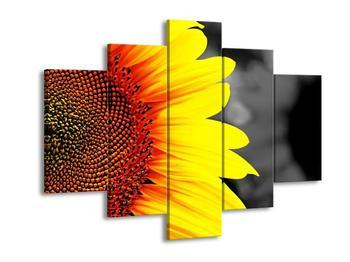 Obraz květu slunečnice (F002400F150105)