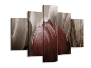 Obraz červeného květu tulipánu (F002501F150105)