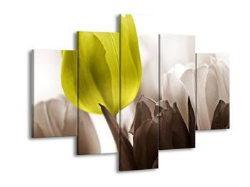Krásný obraz nazelenalého tulipánu (F002521F150105)