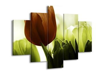 Krásný obraz tulipánu (F002523F150105)