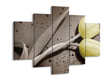 Obraz žlutých tulipánů - šedé pozadi (F002532F150105)