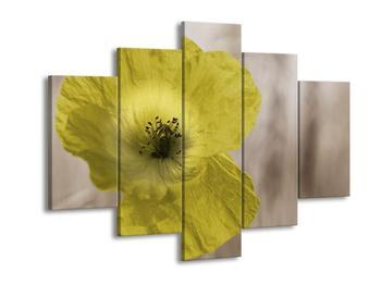 Obraz květu žluté rostliny (F002562F150105)