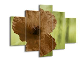 Obraz květu hnědé rostliny (F002563F150105)