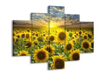 Obraz slunečnic při západu slunce  (F002612F150105)