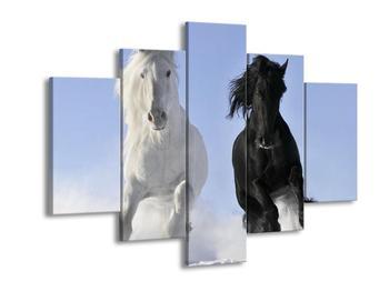 Obraz černého a bílého koně ve sněhu  (F002614F150105)