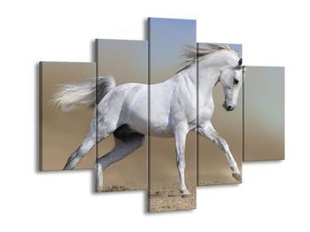 Obraz bílého koně v pohybu  (F002629F150105)