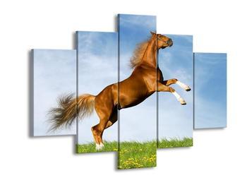 Obraz hnědého koně v pohybu  (F002646F150105)