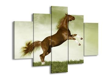 Obraz hnědého koně na zadních  (F002673F150105)