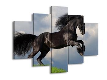 Obraz černého koně  (F002681F150105)