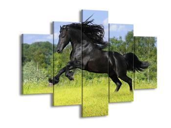 Obraz koně s rozevlátou hřívou  (F002685F150105)