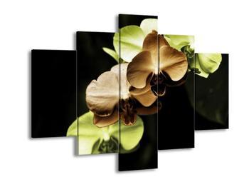 Obraz hnědých a zelených orchideí  (F002723F150105)