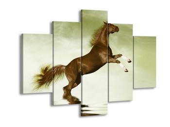 Obraz hnědého koně na zadních  (F002878F150105)