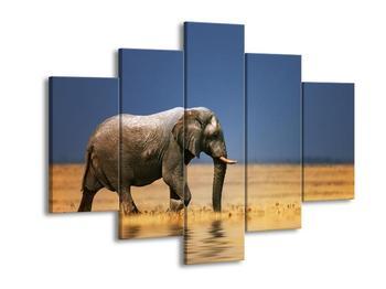 Obraz slona v savaně  (F002905F150105)