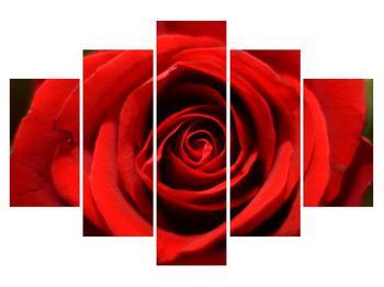 Rózsa virág részletes képe (K010280K150105)