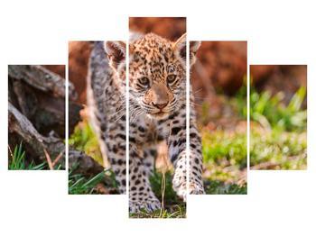 Obraz malého geparda (K010832K150105)