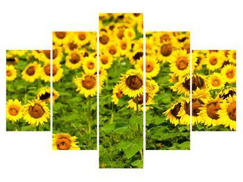 Obraz slunečnicového pole (K010972K150105)