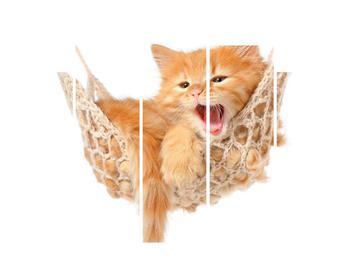 Obraz mačky v sieti (K011123K150105)