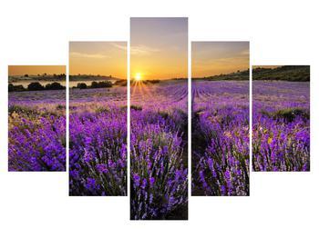 Tablou cu câmp de levandă (K011154K150105)