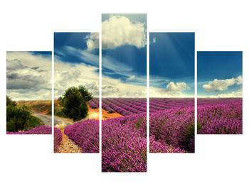 Obraz levanduľového poľa (K011156K150105)