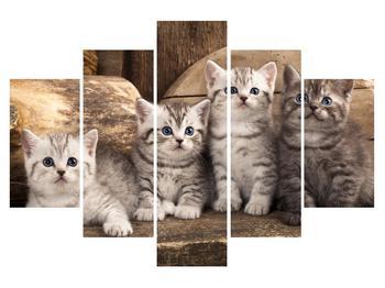 Obraz koťat (K011214K150105)