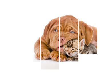 Obraz psa s mačiatkom (K011300K150105)