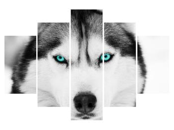 Obraz psa husky (K011339K150105)