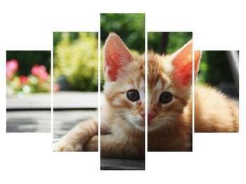 Obraz mačiatka (K011584K150105)