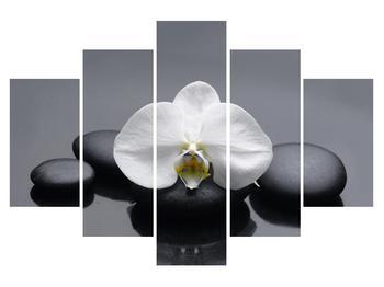 Obraz orchideje (K011712K150105)