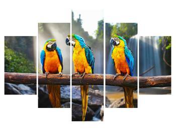 Obraz papoušků (K011994K150105)