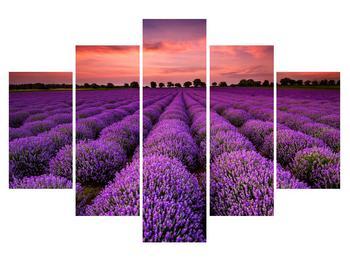 Tablou cu câmp de lavandă (K011996K150105)