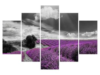 Obraz levanduľového poľa (K012011K150105)
