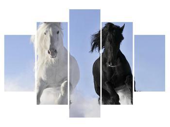 Obraz koní (K012039K150105)