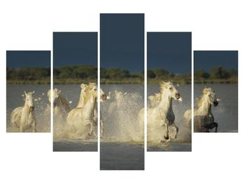 Obraz bielych koní (K012053K150105)
