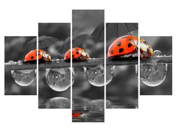 Obraz lienok sedembodkových s dáždnikmi (K012059K150105)
