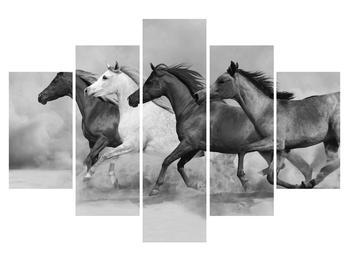 Čiernobiely obraz koní (K012065K150105)