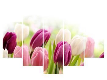 Obraz pučících tulipánů (K012125K150105)