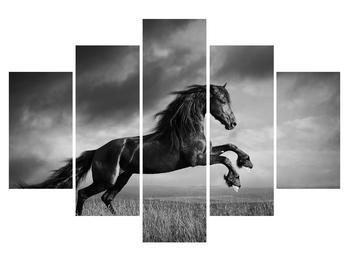 Čiernobiely obraz koňa (K012248K150105)
