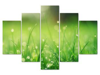 Obraz - rosa na tráve (V020169V150105)