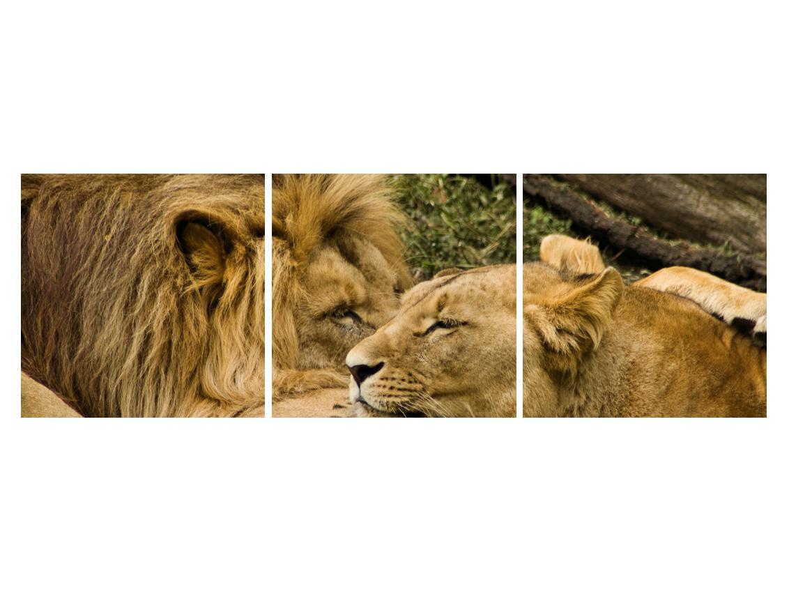 Moderna slika K010140K15050 (K010140K15050)