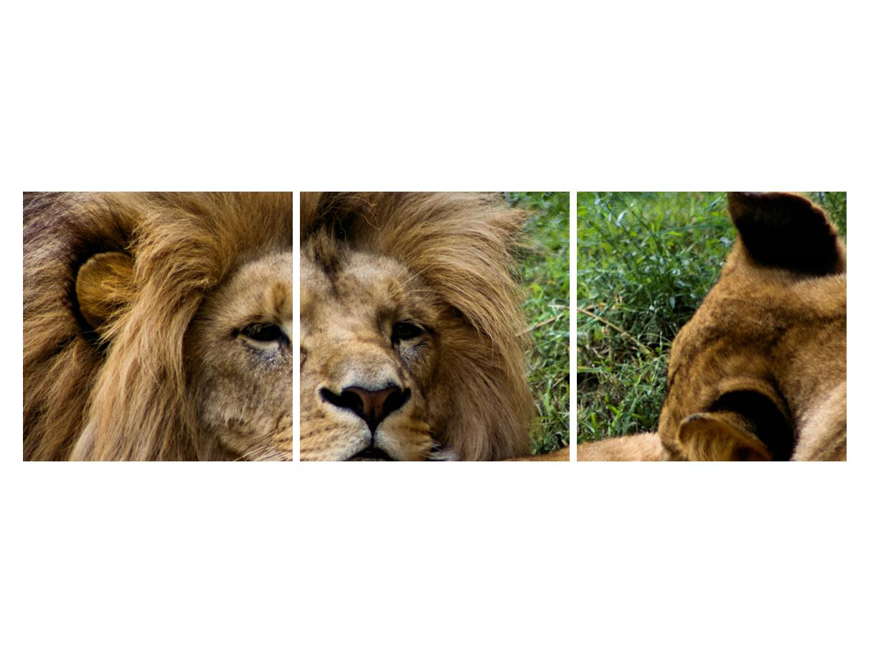 Moderna slika K010143K15050 (K010143K15050)