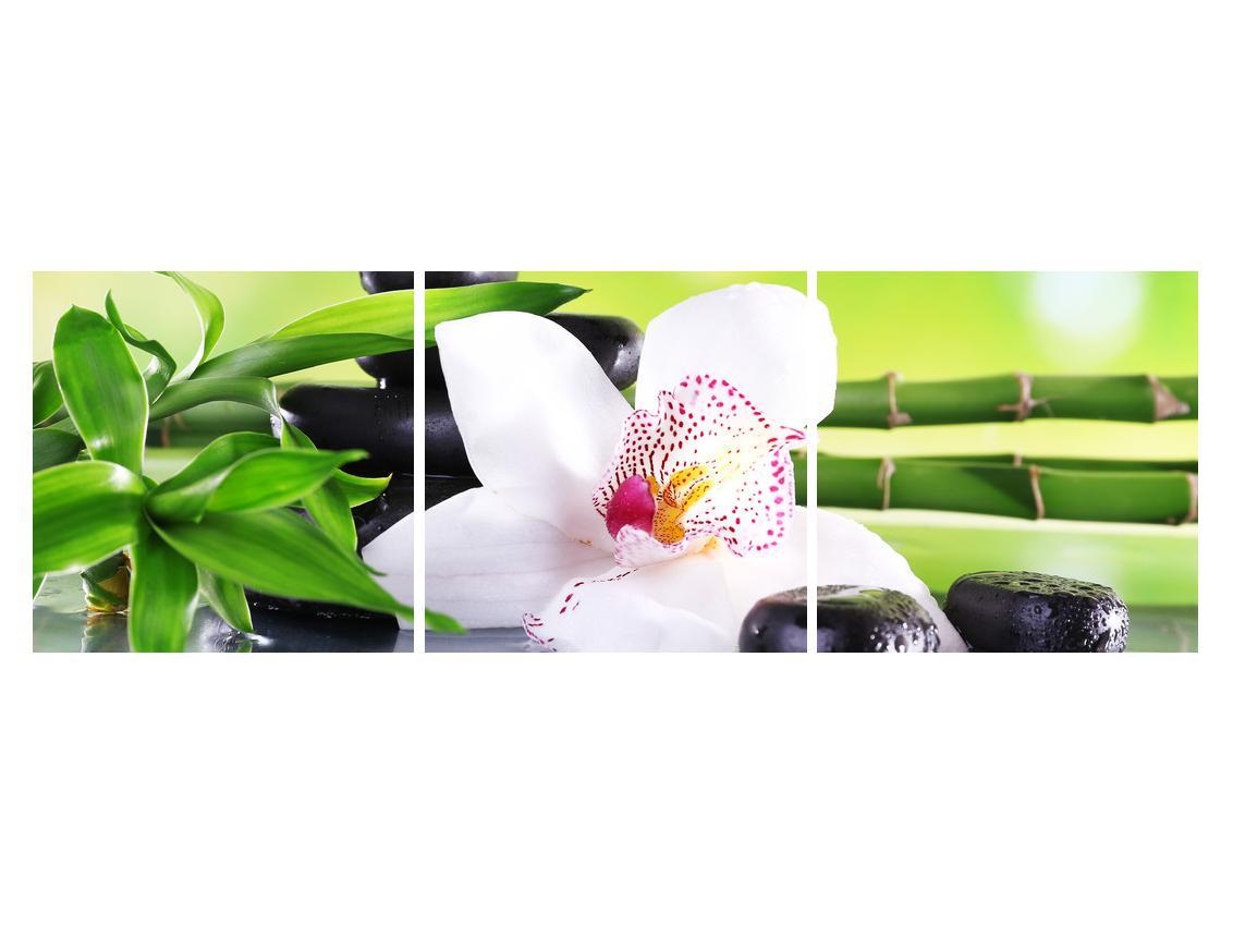 Slika orhideje (K011995K15050)