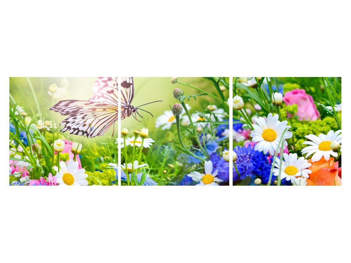 Slika poletnih cvetov z metuljem (K012220K15050)